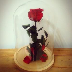 Rosa eterna en urna de cristal