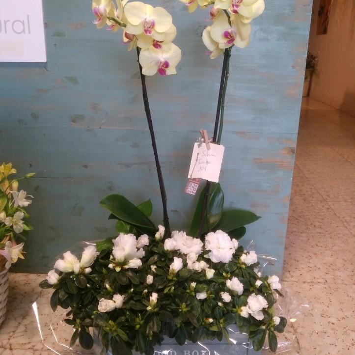 Composición de orquídea y azaleas
